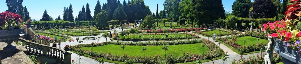 Panorama of the rose garden